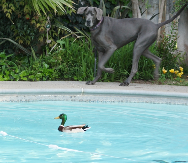 Mikey and the Duck