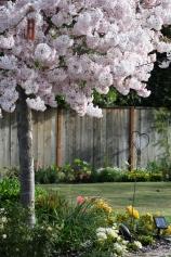 Flower beds in Spring