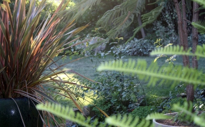 Maxie in Undergrowth