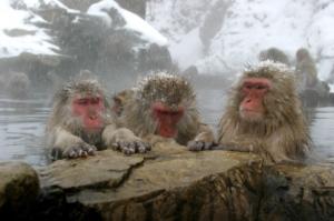 Cute Snow Monkeys