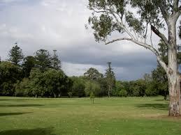 park with eucalyptus