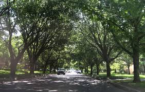 tree-lined street - en.wikipedia.org