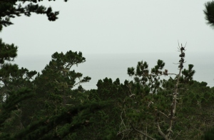 treetops and ocean