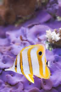 fishpage-info