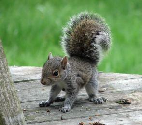 babysquirrel - furrytalk.com