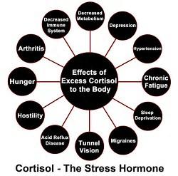 cortisol effect - wakeup-world.com