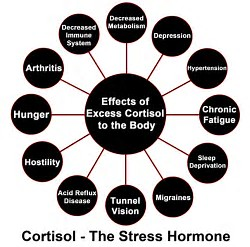 cortisol effect - wakeup-world.com