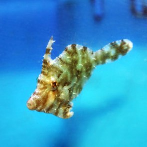 filefish - that petplace.com