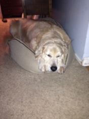 Maxie gives up, and sleeps in the little bed