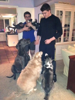 The boys and the puppies